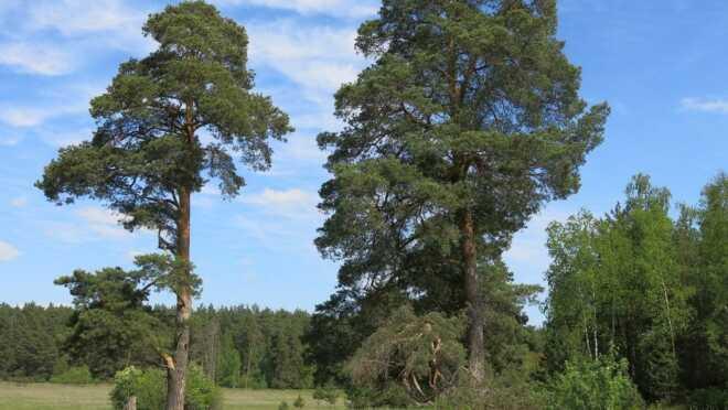 ЖК Окские леса